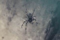 Zwart koel spin stil verblijf Stock Foto