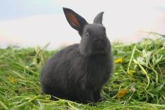 Zwart konijn op groen gras Stock Foto
