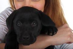Zwart Labrador puppy royalty-vrije stock fotografie