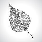 Zwart macroblad van geïsoleerde berkboom Stock Foto's