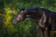 Zwart paard dicht omhooggaand portret stock foto's