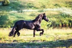 Zwart paard die op het gebied galopperen Stock Fotografie