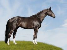 Zwart paard op de blauwe en groene achtergrond Royalty-vrije Stock Foto