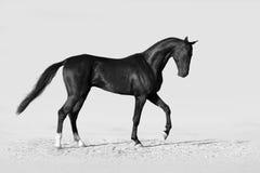 Zwart paard in woestijn stock afbeeldingen