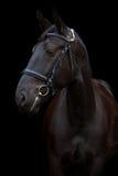 Zwart paardportret op zwarte achtergrond Royalty-vrije Stock Foto's
