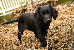 Zwart puppy stock foto's