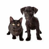 Zwart puppy en katje Stock Foto