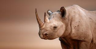 Zwart Rinocerosportret Stock Afbeelding