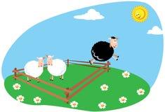 Zwart schapen Stock Afbeelding