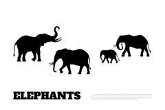 Zwart silhouet van een familie van olifanten op een witte achtergrond Afrikaanse dieren Royalty-vrije Stock Foto