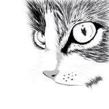 Zwart silhouet van kat. Vectorillustratie. Stock Afbeeldingen