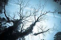 Zwart silhouet van oude boom Stock Fotografie