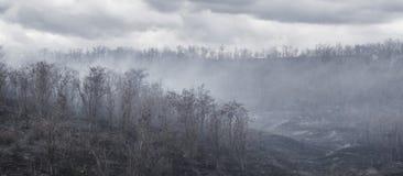 Zwart verkoold bomen en gras in de rook na de brand in de vallei de sombere wolkenachtergrond stock afbeeldingen