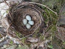 Zwart vogelnest met ei stock foto