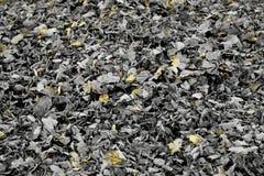 Zwart-wit Autumn Leaves met Gele Details Stock Afbeeldingen
