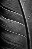 Zwart-wit beeld van een stuk vogelveren stock afbeeldingen