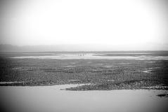 Zwart-wit beeld van inham at low tide Royalty-vrije Stock Foto's
