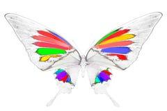 Zwart-wit beeld van mooie vlinder met kleurrijke vleugels Royalty-vrije Stock Afbeeldingen