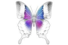 Zwart-wit beeld van mooie vlinder met kleurrijke vleugels Stock Fotografie