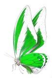 Zwart-wit beeld van mooie vlinder met kleurrijke vleugels Royalty-vrije Stock Afbeelding