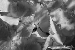 Zwart-wit bloemen Stock Foto's