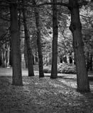 Zwart-wit boomlichaam stock afbeelding
