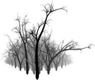 Zwart-wit Bos Stock Illustratie
