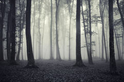 Zwart-wit bos met geheimzinnige mist Royalty-vrije Stock Afbeeldingen