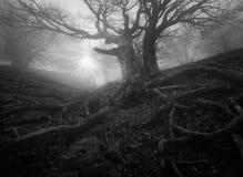 Zwart-wit boslandschap Stock Afbeeldingen