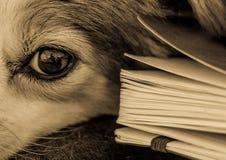 Zwart-wit close-up van hond met boek royalty-vrije stock afbeeldingen