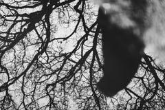 Zwart-wit die silhouet van een leurder in een watervulklei wordt weerspiegeld stock foto