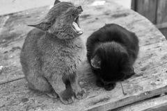 Zwart-wit foto van katten Royalty-vrije Stock Foto's