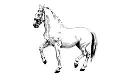 Zwart-wit getrokken paard Stock Afbeelding