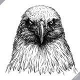 Zwart-wit graveer geïsoleerde adelaars vectorillustratie stock illustratie