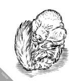 Zwart-wit graveer geïsoleerde eekhoornillustratie Royalty-vrije Stock Foto