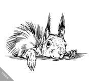 Zwart-wit graveer geïsoleerde eekhoornillustratie Royalty-vrije Stock Afbeelding