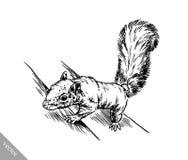 Zwart-wit graveer geïsoleerde eekhoornillustratie Royalty-vrije Stock Afbeeldingen