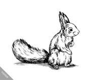 Zwart-wit graveer geïsoleerde eekhoornillustratie Stock Afbeeldingen