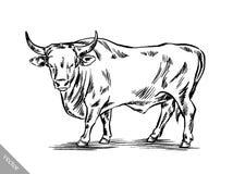 Zwart-wit graveer geïsoleerde koe Royalty-vrije Stock Afbeeldingen