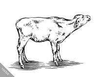 Zwart-wit graveer geïsoleerde koe Stock Afbeelding