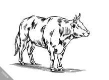 Zwart-wit graveer geïsoleerde koe Stock Foto's