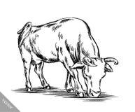 Zwart-wit graveer geïsoleerde koe Stock Fotografie