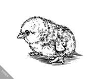 Zwart-wit graveer kippenillustratie Stock Afbeelding