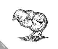 Zwart-wit graveer kippenillustratie Royalty-vrije Stock Fotografie