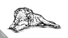 Zwart-wit graveer wolf Stock Afbeeldingen