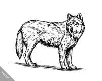Zwart-wit graveer wolf Royalty-vrije Stock Fotografie