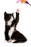 Zwart-wit katje Stock Foto