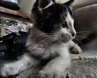 Zwart-wit katje op de lijst royalty-vrije stock afbeelding