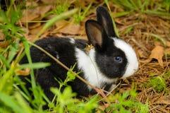 Zwart-wit konijn Royalty-vrije Stock Foto's
