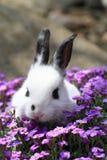Zwart-wit konijn in de bloemen Stock Foto